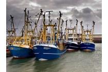 Proyecto de Real Decreto por el que se establecen condiciones de trabajo en el sector pesquero