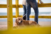 Custodia compartida para las mascotas